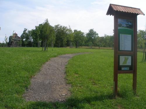 Sázíme stromy 2011