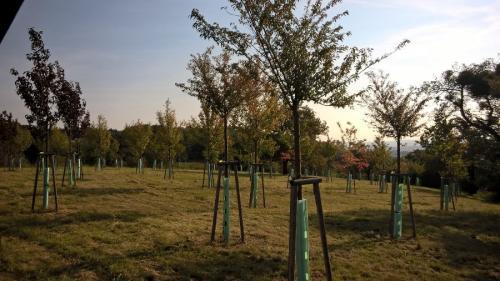 Sázíme stromy 2016 v.2